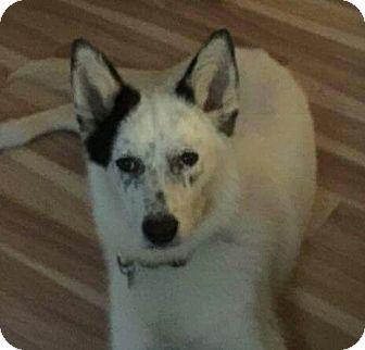 Siberian Husky Mix Dog for adoption in Thomasville, North Carolina - Nadia