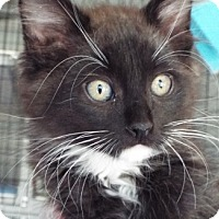 Adopt A Pet :: Flame - Grants Pass, OR