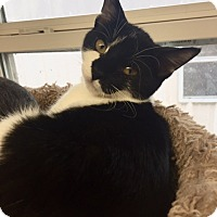 Adopt A Pet :: Natalia - San Leon, TX