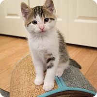 Adopt A Pet :: Polaris - Minneapolis, MN