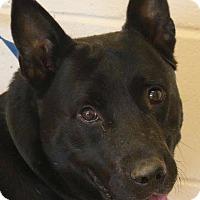 Adopt A Pet :: Zephyr - McDonough, GA