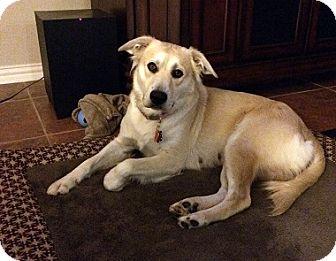 Labrador Retriever Mix Dog for adoption in Austin, Texas - Leah