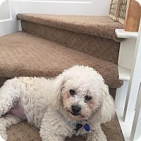 Adopt A Pet :: Jacques - Carlsbad, CA