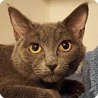 Adopt A Pet :: Krake - Grayslake, IL