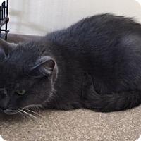 Adopt A Pet :: Toes - Saginaw, MI
