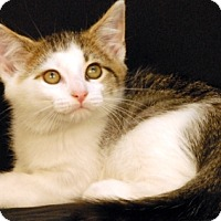 Adopt A Pet :: Riptide - Newland, NC