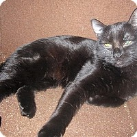 Adopt A Pet :: Luna Meowgood - Vancouver, BC