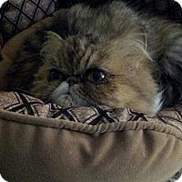 Adopt A Pet :: Dior - Columbus, OH