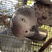 Adopt A Pet :: Peanut - Punta Gorda, FL