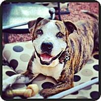 Adopt A Pet :: ADOPTED**Maynard, aka Pigpen - Phoenix, AZ