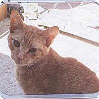 Adopt A Pet :: Moe - El Cajon, CA