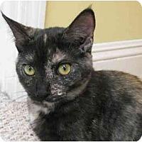 Adopt A Pet :: Maddie - Davis, CA