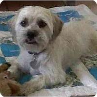 Adopt A Pet :: Barney - Scottsdale, AZ