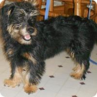 Adopt A Pet :: Melody - Chewelah, WA