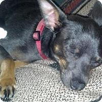 Adopt A Pet :: Smokey - Fort Worth, TX