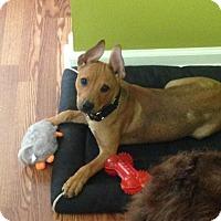 Adopt A Pet :: Kuna - Daleville, AL