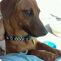 Adopt A Pet :: Remy - Tucson, AZ