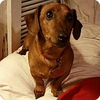 Adopt A Pet :: Chevy - Little Rock, AR