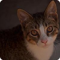 Adopt A Pet :: Rowdy - Morganton, NC
