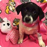 Adopt A Pet :: Vicki - Sudbury, MA
