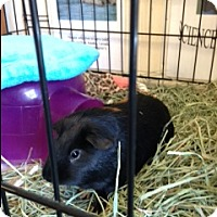 Adopt A Pet :: Hugo - Fullerton, CA
