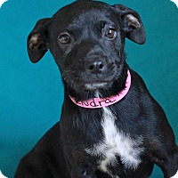 Adopt A Pet :: Kendra - Waldorf, MD