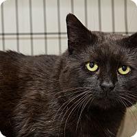 Adopt A Pet :: Serverus - Acushnet, MA