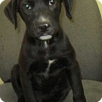 Adopt A Pet :: Major - Clear Lake, IA