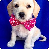 Adopt A Pet :: Manwell - Irvine, CA