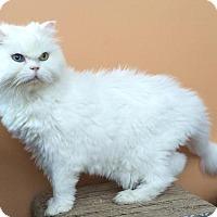 Adopt A Pet :: Jules - Alpharetta, GA