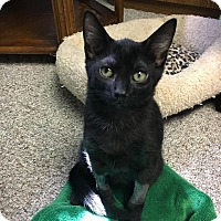 Adopt A Pet :: Marty - Columbus, OH