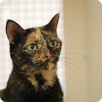 Adopt A Pet :: Sweet Mama - Richmond, VA