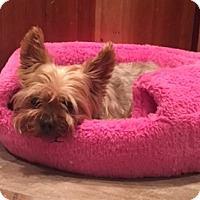 Adopt A Pet :: Fletcher - N. Babylon, NY