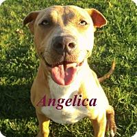 Adopt A Pet :: Angelica - El Cajon, CA