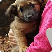 Adopt A Pet :: Betsy - Seabrook, NH