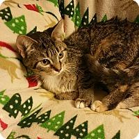 Adopt A Pet :: Mary - Ortonville, MI
