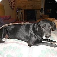 Adopt A Pet :: Midnight - North Jackson, OH