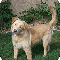 Adopt A Pet :: Biscuit - Scottsdale, AZ