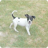 Adopt A Pet :: Dominique - Katy, TX