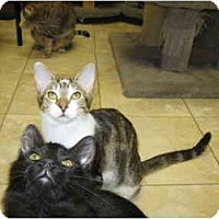 Adopt A Pet :: Bella & Mindy - Deerfield Beach, FL