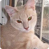 Adopt A Pet :: Bailey(KL) - Little Falls, NJ