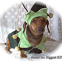Adopt A Pet :: Heinz - Tucson, AZ