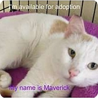 Adopt A Pet :: Maverick - Modesto, CA