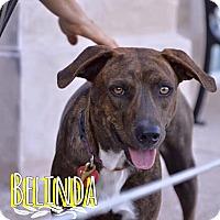 Adopt A Pet :: Belinda - San Antonio, TX