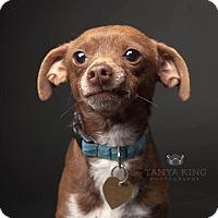 Adopt A Pet :: Tango - Pitt Meadows, BC