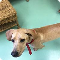 Adopt A Pet :: Rocky - Gadsden, AL