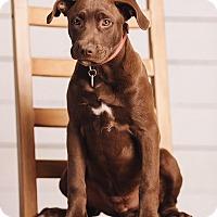 Adopt A Pet :: Chip - Portland, OR