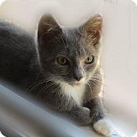 Adopt A Pet :: Lily - Courtesy Listing - Sparta, NJ
