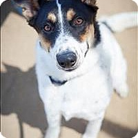 Adopt A Pet :: Bindi - Riverside, CA