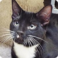 Adopt A Pet :: Gunner - Grants Pass, OR